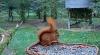 makov 5 oktober eekhoorn.PNG