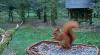 makov 5 oktober eekhoorn 2.PNG