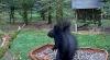 makov 5 oktober zwarte eekhoorn.PNG