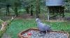 makov 5 oktober duif.PNG