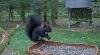 makov 5 oktober zwarte eekhoorn 2.PNG