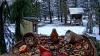 makov 3 december 2020 winter1.PNG