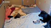 jonge hondjes yuki 12 april.PNG