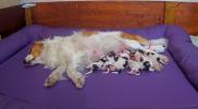 puppy nest 9 juli.PNG